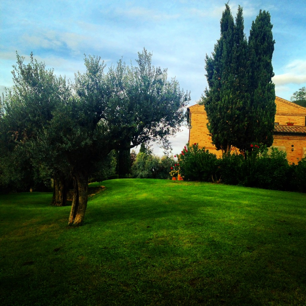 at mu home, among the olive trees